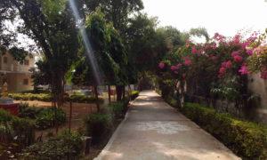 Chorten India Bodhgaya Root 2 md